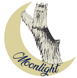 Moonlight Yorkies